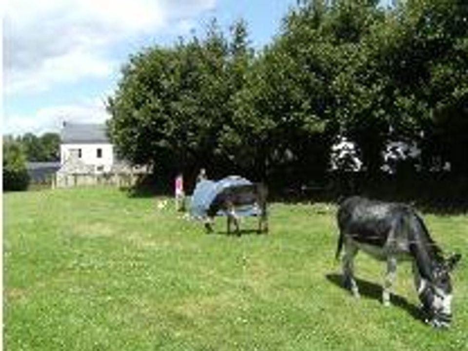 Camping Municipal Sainte- Brigitte - Camping Morbihan