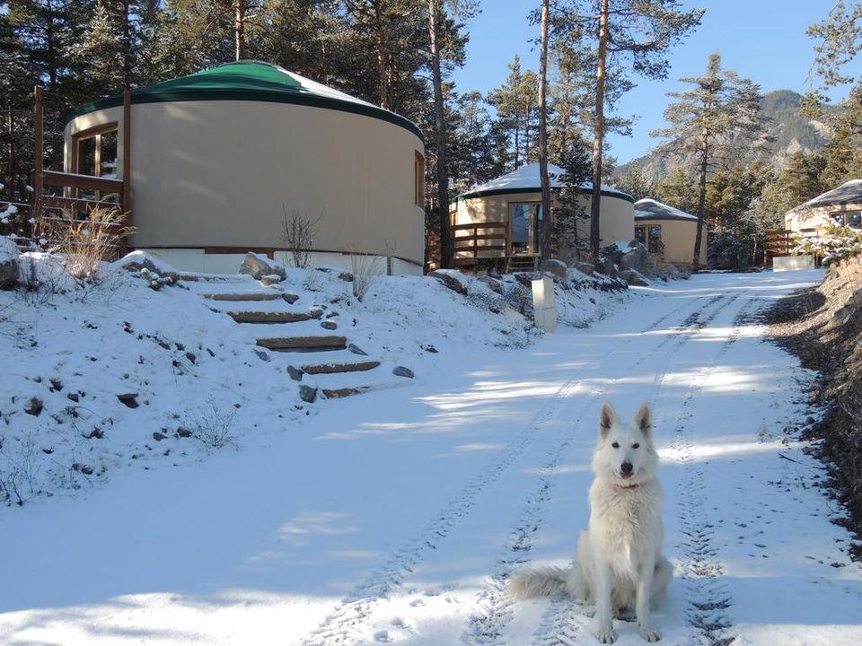 le loup blanc du riou - Camping Alpes-de-Haute-Provence