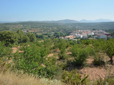 Camping Altomira  - Camping Castellón - Image N°31