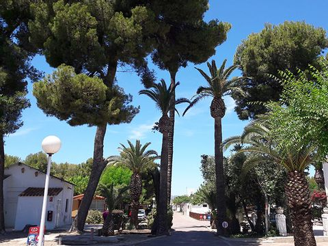 Camping L'Alqueria - Camping Valence - Image N°24