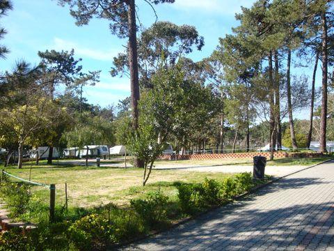 Camping Caminha - Camping Nord du Portugal - Image N°2