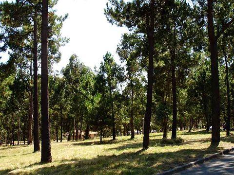 Camping Orbitur Madalena - Camping Nord du Portugal - Image N°7