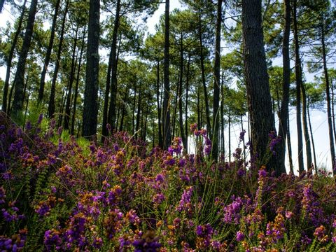 Camping Les Vignes - Camping Landes - Image N°24