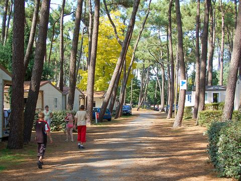 Camping Les Biches - Camping Vendée - Image N°41