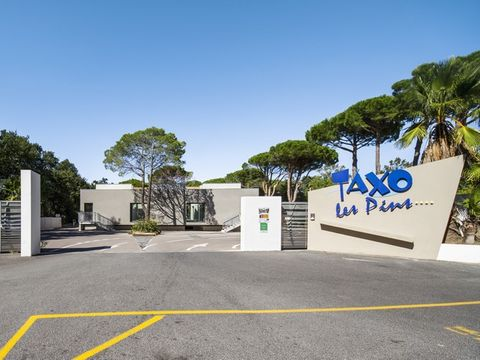 Camping Taxo les Pins  - Camping Pirenei Orientali - Image N°12