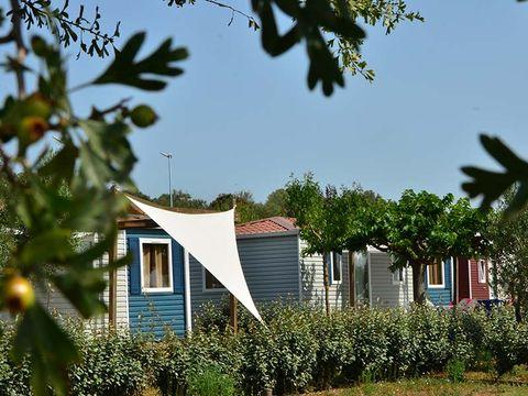 Camping Domaine de Sainte Véziane - Camping Herault - Image N°29