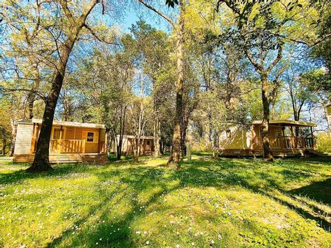 Camping Le Lion - Camping Ardeche - Image N°7