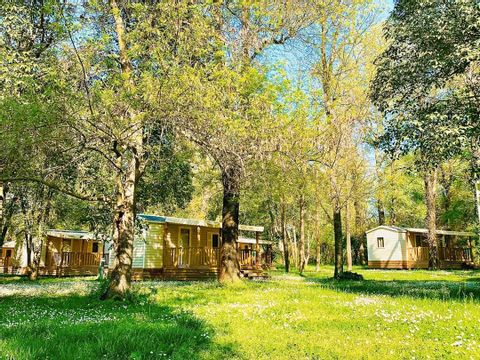 Camping Le Lion - Camping Ardeche - Image N°13