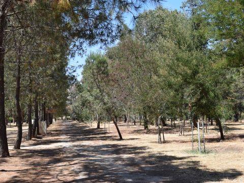 Camping Paradella - Camping Corse - Image N°8