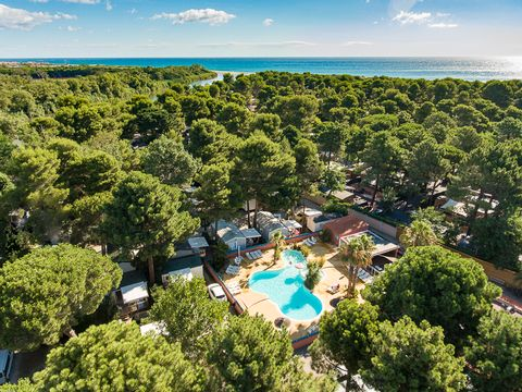 Camping Le Bosquet - Camping Pyrenees-Orientales - Image N°11