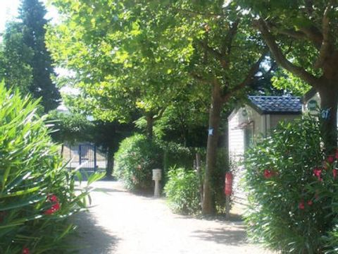 Camping Lou Comtadou - Camping Vaucluse - Image N°8