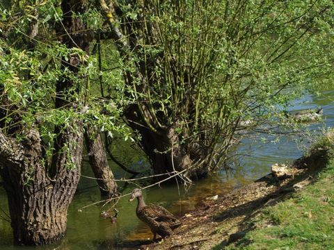 Camping la Vie  - Camping Vendée - Image N°11
