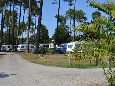 Camping Les Echasses - Camping Landes - Image N°7