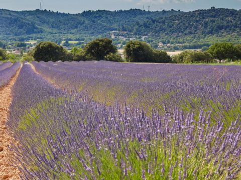 Camping Verdon Parc  - Camping Alpes-de-Haute-Provence - Image N°29