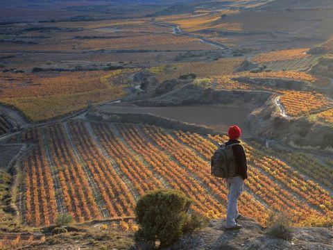 Camping De Haro - Camping La Rioja - Image N°15