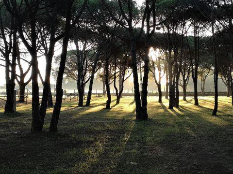 Camping Playa Taray - Camping Huelva - Image N°8