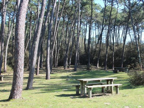 Camping Le Bosquet - Camping Vendée - Image N°6