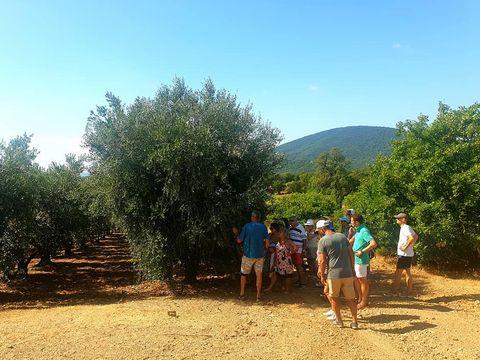 Village Vacances Le Parc des Chênes - Camping Var - Image N°25