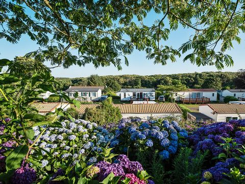 Camping Domaine de Bel Air - Camping Finistere - Image N°41
