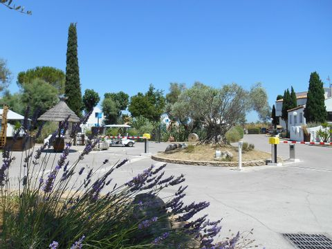 Camping Le Camarguais - Camping Herault - Image N°8