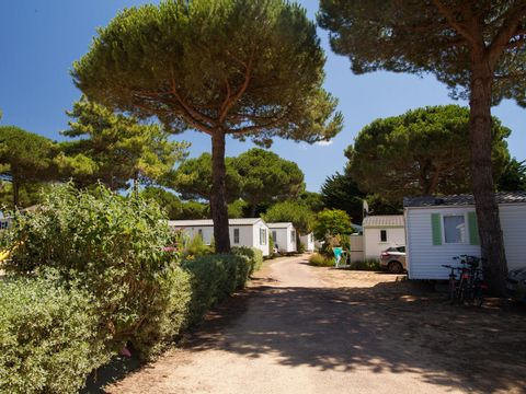 Camping Le Suroit  - Camping Charente-Maritime - Image N°17