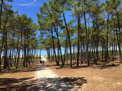 Camping La Pinède  - Camping Charente-Maritime - Image N°25