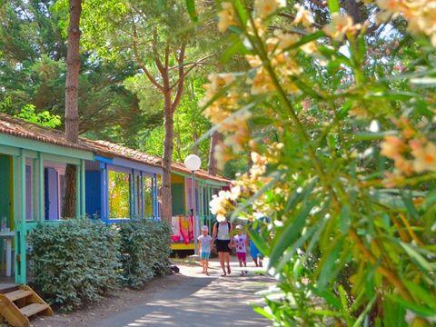 Camping Eden   - Camping Gard - Image N°25
