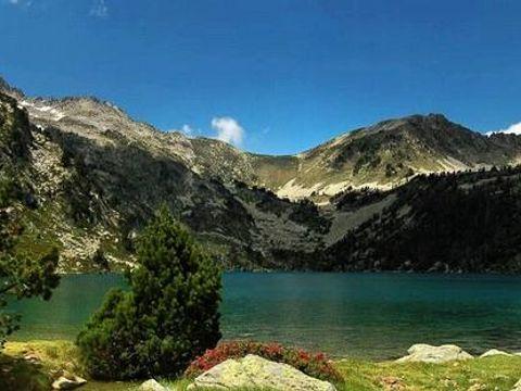 La Forêt - Camping Sites et Paysages - Camping Hautes-Pyrenees - Image N°13
