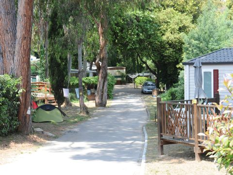 Camping Le Plateau des Chasses - Camping Alpes-Maritimes - Image N°19