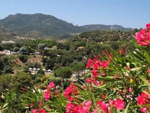 Camping Le Plateau des Chasses - Camping Alpes-Maritimes - Image N°14