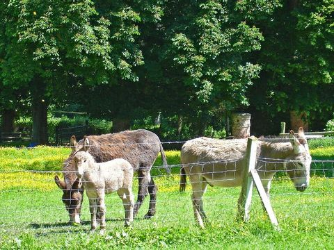 Camping Val de Trie - Camping Somme - Image N°26