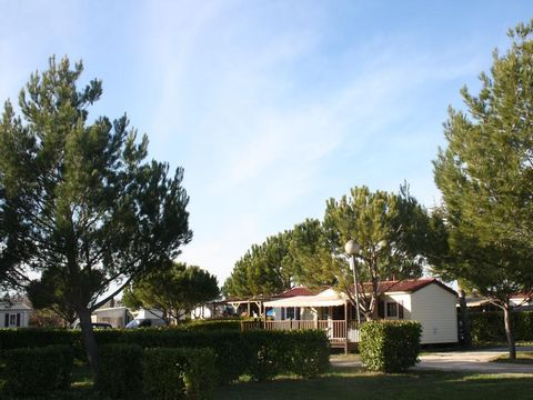 Camping Manon - Camping Vaucluse - Image N°8