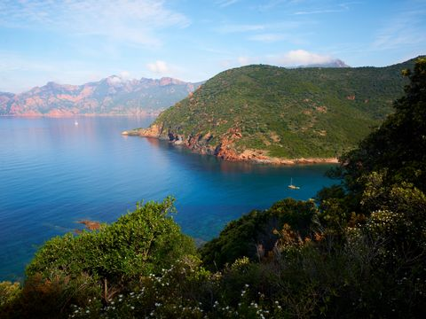 Camping Les Oliviers - Camping Corse du sud - Image N°9