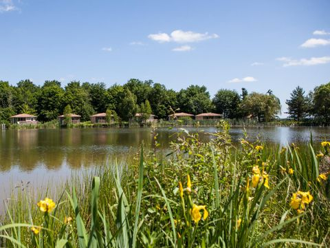Camping Domaine Les Bois du Bardelet  - Camping Loiret - Image N°13