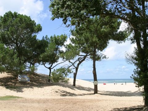 Camping Airotel Pyla - Camping Gironde - Image N°19