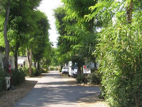 Camping Les Fougères - Camping Charente-Maritime - Image N°6