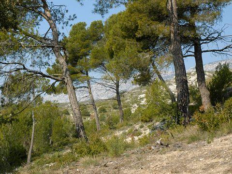 Camping Le Cezanne - Camping Bouches-du-Rhone