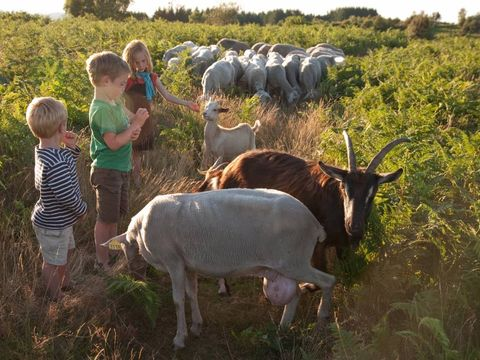 La ferme des Champeaux  - Camping Haute-Vienne - Image N°8