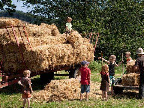 La ferme des Champeaux  - Camping Haute-Vienne - Image N°5