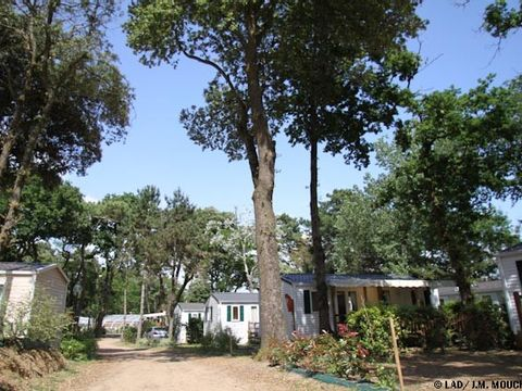 Camping La Courance - Camping Loire-Atlantique - Image N°5