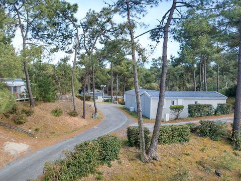 Camping Le Domaine des Pins   - Camping Vendée - Image N°3