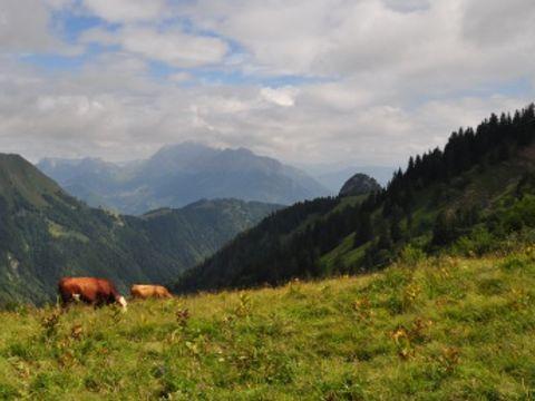 Camping La Bruyere - Camping Savoie - Image N°4