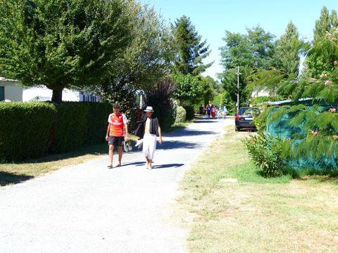 Camping Les Pins d'Oléron - Camping Paradis - Camping Charente-Maritime - Image N°24