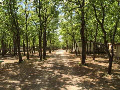 Camping Domaine des Chenes Blancs - Camping Vaucluse - Image N°24