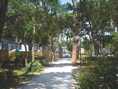 Camping Park Albatros Village - Camping Livourne - Image N°12