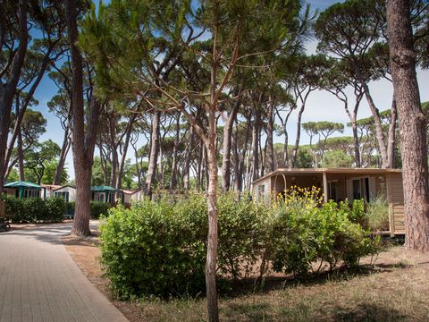 Camping Park Albatros Village - Camping Livourne - Image N°18