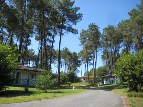Camping Domaine des Grands Pins  - Camping Dordogne - Image N°8