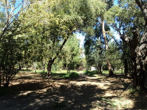 Camping Olmello Plage  - Camping Corse - Image N°7