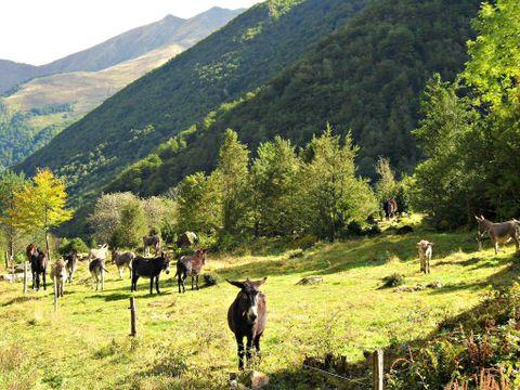 Ariège  Camping Le Haut Salat - Camping Ariège - Afbeelding N°6