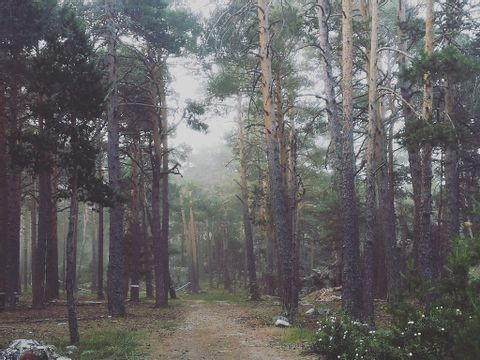 Camping Sierra de Albarracin - Camping Aragon - Espagne - Image N°10